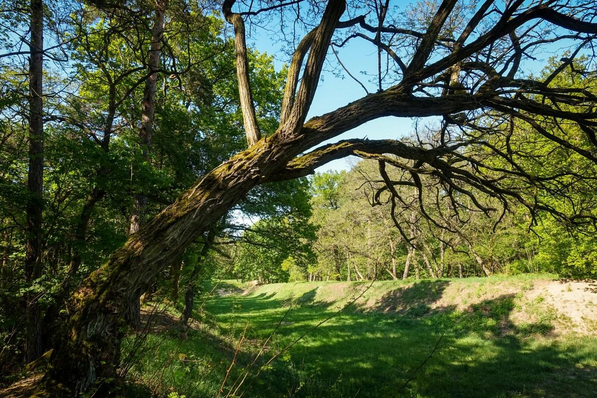 Murellenschlucht - Einsame Natur