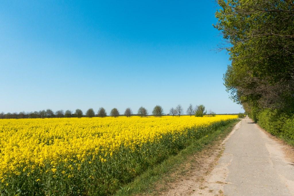 Marienfelder Feldmark