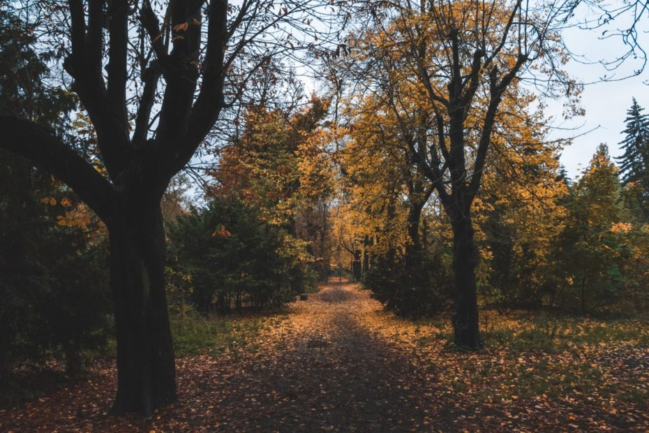 Ein Herbstspaziergang im Leise-Park