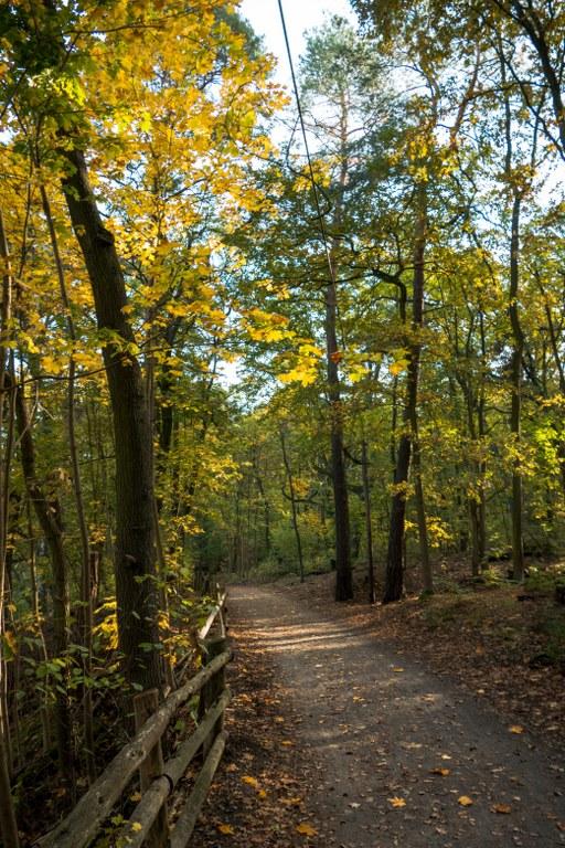 Dueppeler-Forst-Waldweg