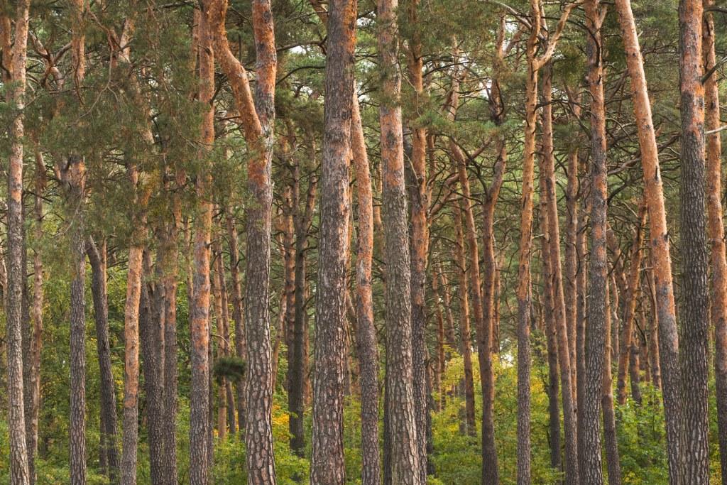 Der-Wald-am-Kleinen-Mueggelsee