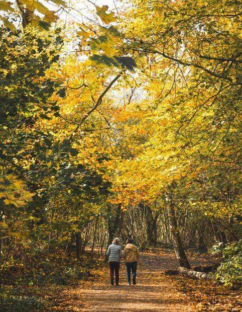 Herbstspaziergang in Alt-Hermsdorf