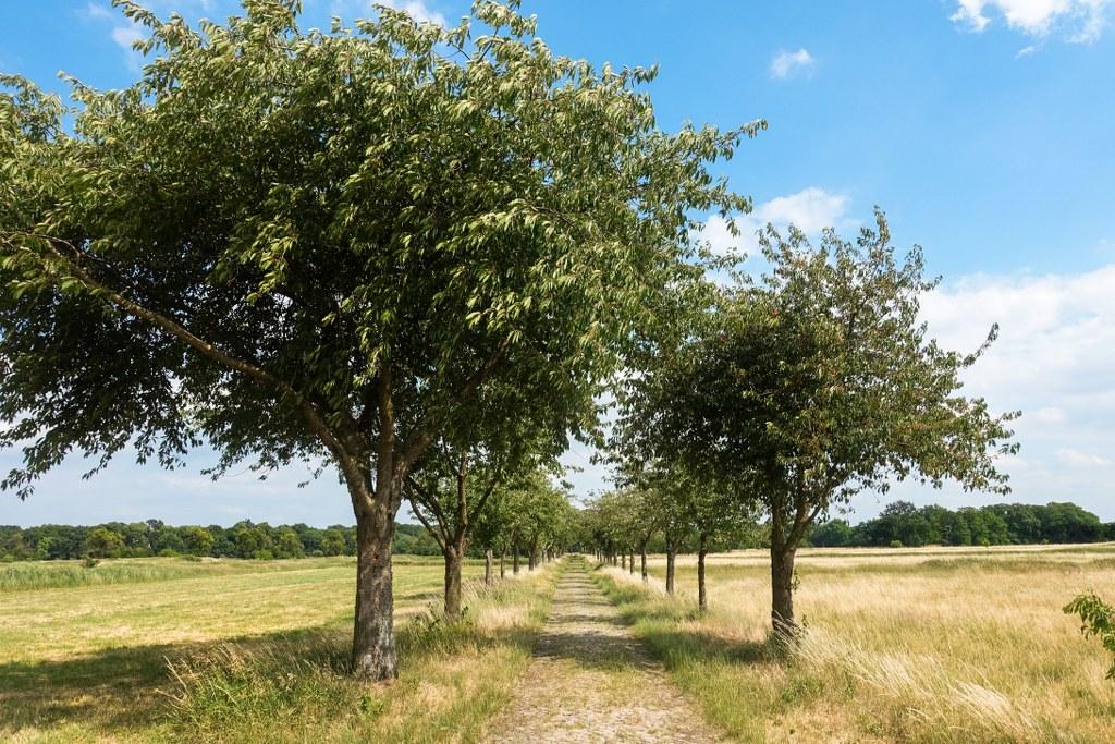 Rieselfelder-Karolinenhoehe-Alleen-aus-Obstbaeumen