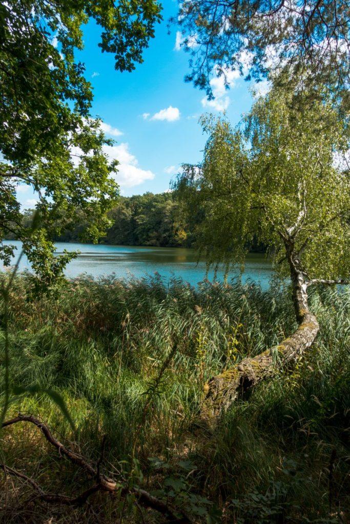 Wilde-Natur-an-der-Krummen-Lanke