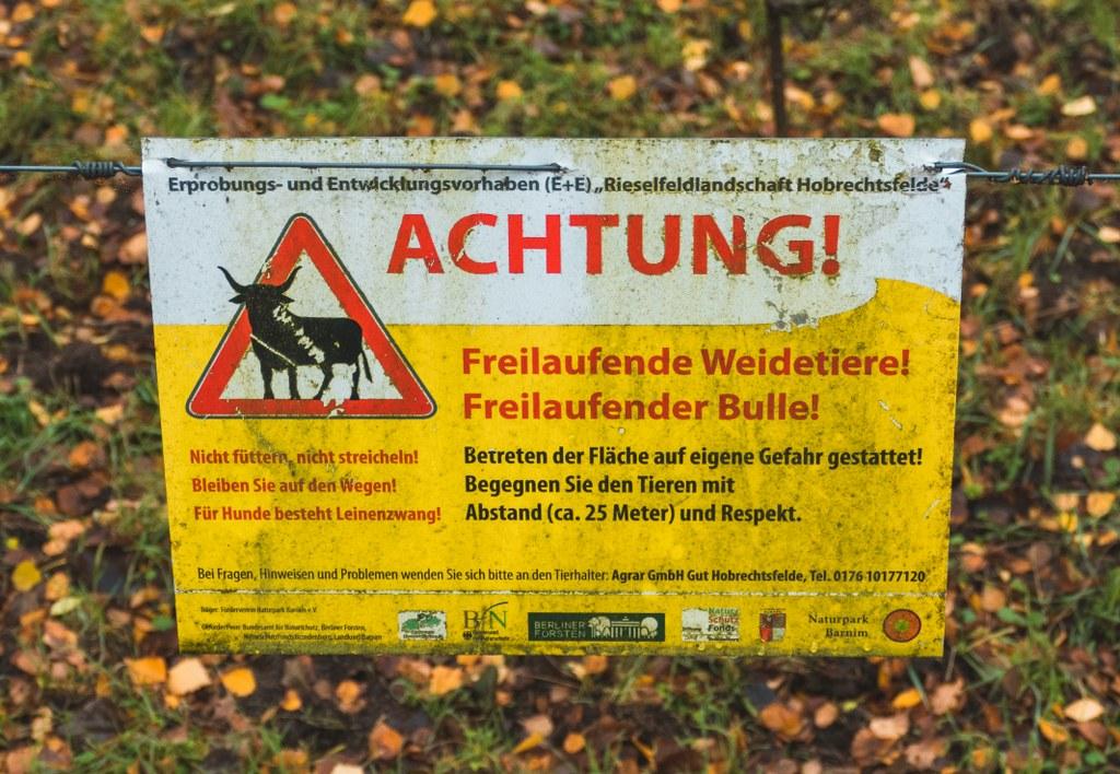 Freilaufende Büffel in Pankow