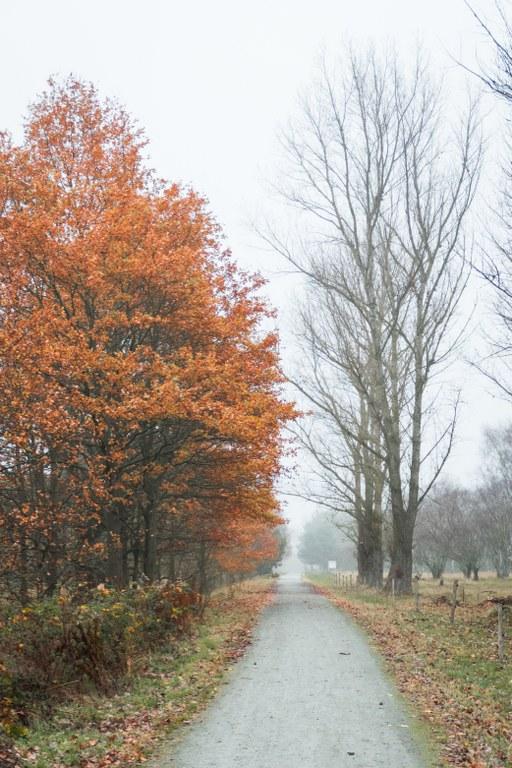 Goldener November Bogenseekette