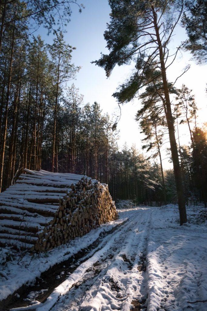 Königswald im Winter
