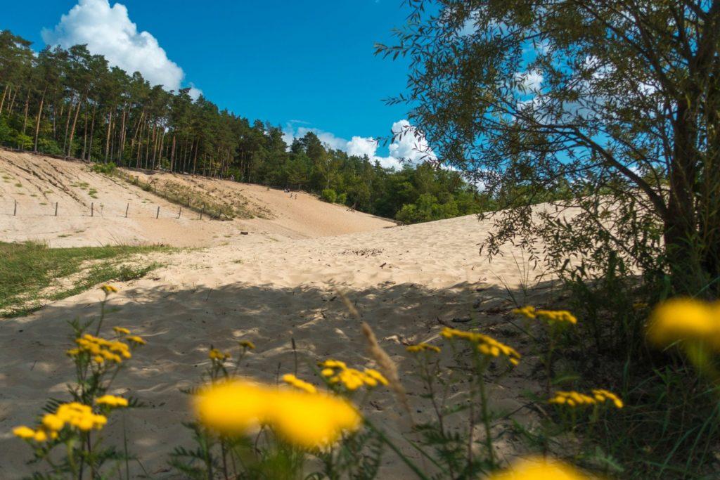 Die Sandgrube im Grunewald