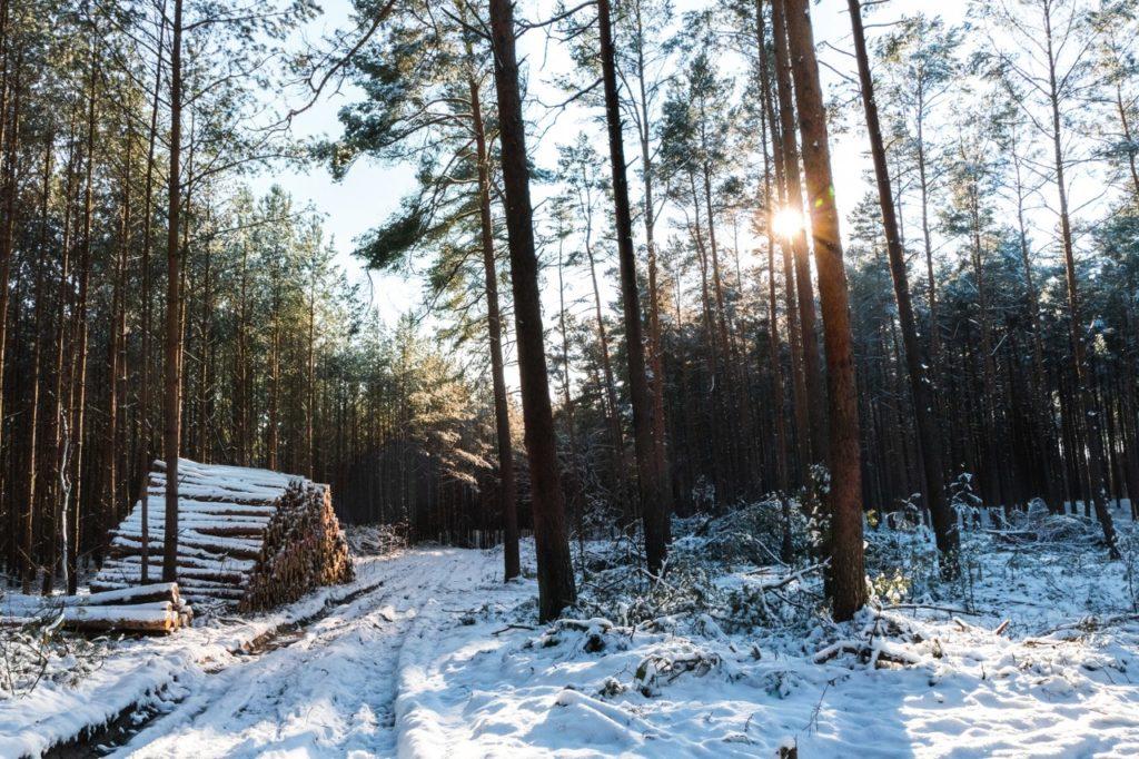 Der Königswald im Winter