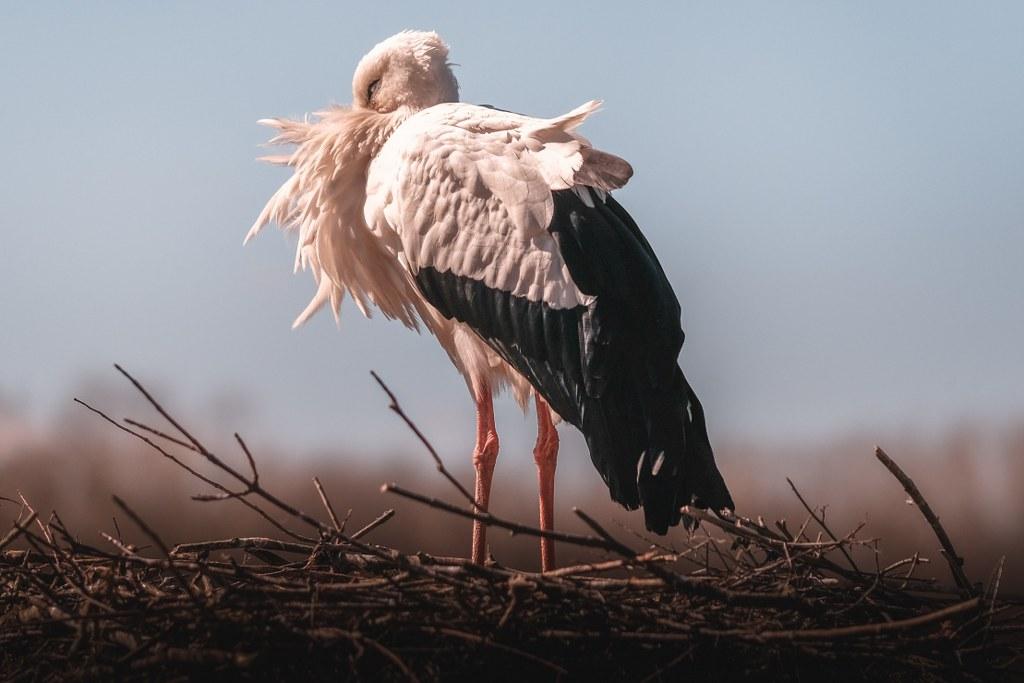 Storch auf dem Naturhof Malchow