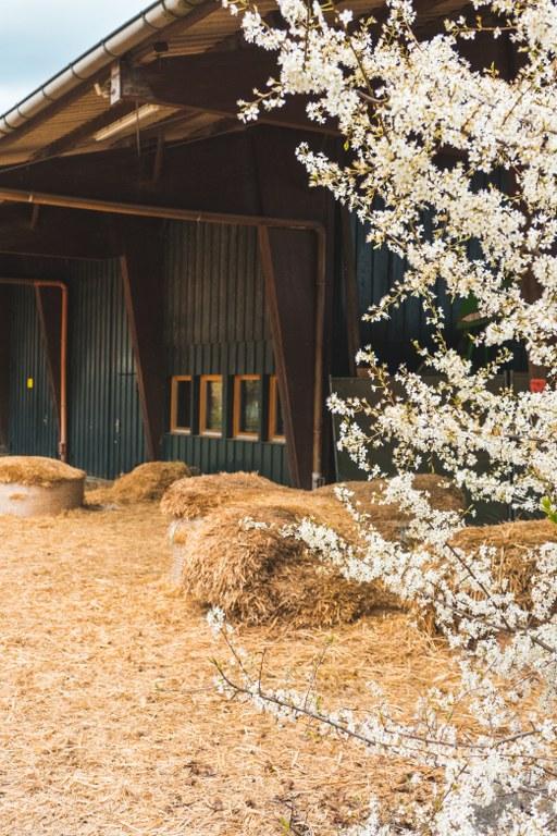 Stroh vor der Scheune auf dem Vierfelderhof