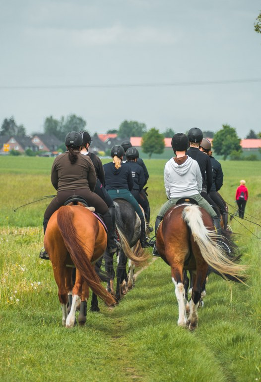 Pferde auf den Falkenberger Rieselfeldern