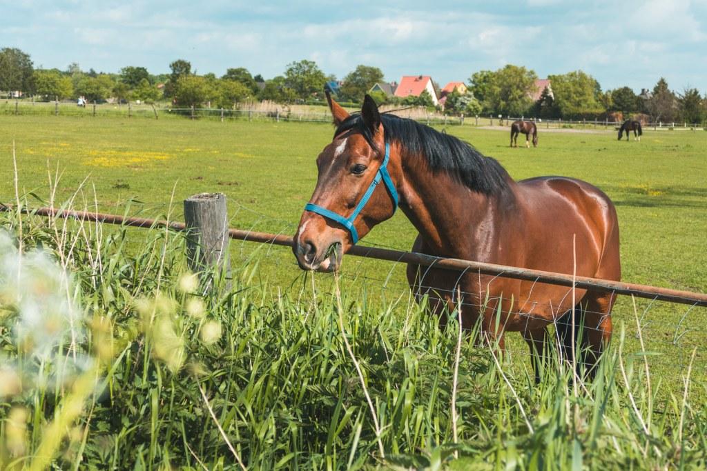 Pferdekoppel auf den Falkenberger Rieselfeldern