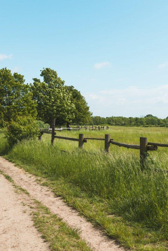 Spazierweg auf den Falkenberger Rieselfelder
